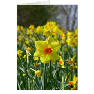 Cartes Jonquilles jaune-orange 01.0.3.0