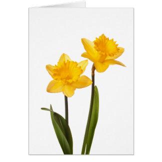 Cartes Jonquilles jaunes de ressort sur le blanc