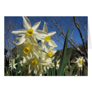 Cartes Jonquils
