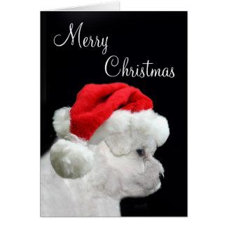 Cartes Joyeux Noël Bichon Frise