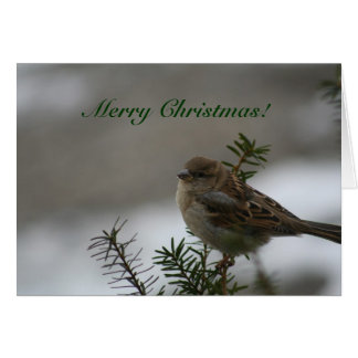 Cartes Joyeux Noël !  Moineau !