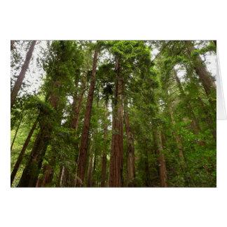Cartes Jusqu'aux séquoias au monument national en bois de