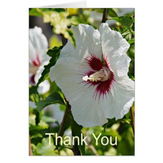 Cartes Ketmie de fleur sauvage, Merci