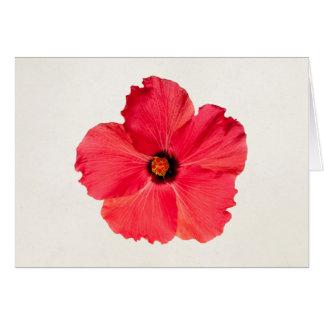 Cartes Ketmie - fleur tropicale personnalisée de roses