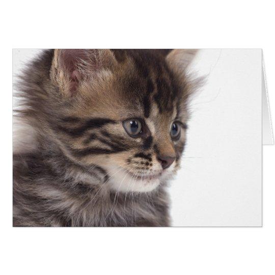 Cartes kitten