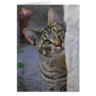 Cartes Kitty triste (chat du Bengale)