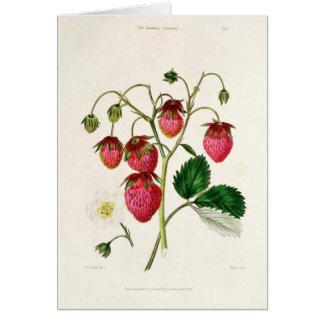 Cartes La fraise de Roseberry, gravée par Watte