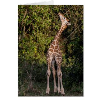 Cartes La girafe atteignant jusqu'à mangent