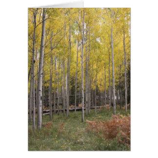 Cartes La lueur jaune d'Aspen