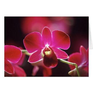 Cartes La Malaisie, orchidée