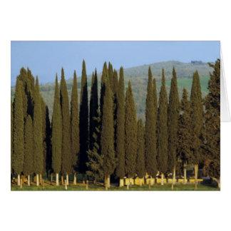 Cartes la vue panoramique des arbres de cyprès