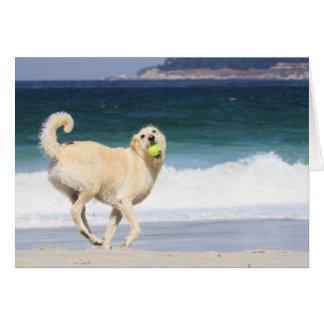 Cartes Labradoodle - jour heureux sur la plage