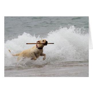 Cartes Labrador - jaune - allez effort !