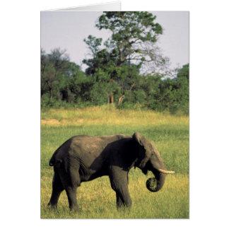 Cartes L'Afrique, Botswana, parc national de Chobe.