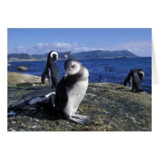 Cartes L'Afrique du Sud, la ville de Simon, pingouin