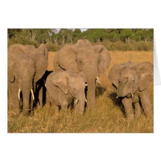 Cartes L'Afrique, Kenya, masai Mara. Éléphant africain