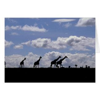 Cartes L'Afrique, Kenya, masai Mara. Girafes (Giraffa