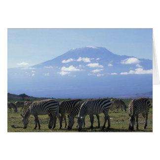 Cartes L'Afrique, Kenya, parc national d'Amboseli,