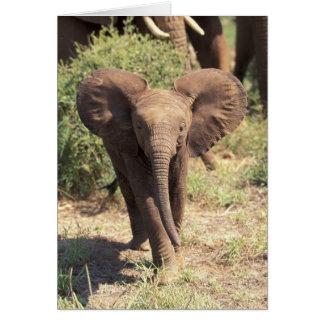 Cartes L'Afrique, Kenya, parc national d'Amboseli.