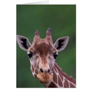 Cartes L'Afrique, Kenya, ranch d'impala. Réticulé