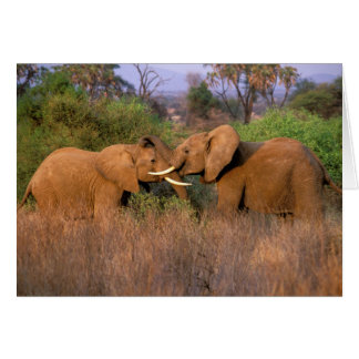 Cartes L'Afrique, Kenya, Samburu. Défi d'éléphant