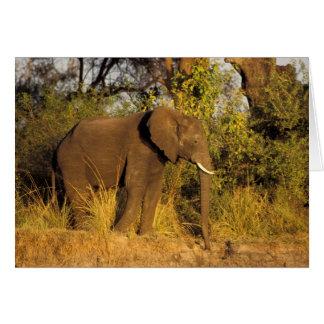 Cartes L'Afrique, Zimbabwe, parc national des chutes