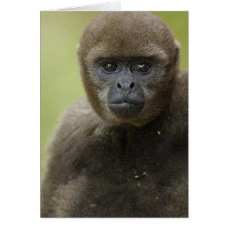 Cartes Lagothricha commun de Lagothris de singe laineux),