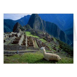 Cartes L'Amérique du Sud, Pérou. Un lama se repose sur