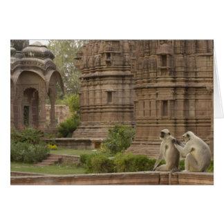 Cartes Langurs de Hanuman ou Noir-fait face, terrain