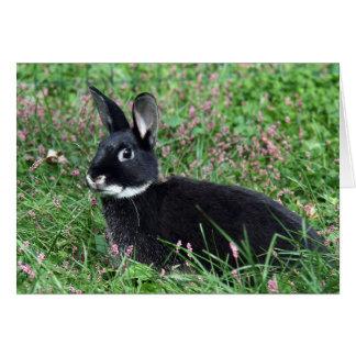 Cartes Lapin noir dans l'herbe
