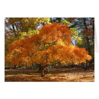 Cartes L'arbre d'Ev