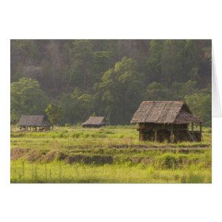 Cartes L'Asie, Thaïlande, Mae Hong Son, huttes de riz