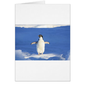 Cartes Le blanc de noir de plumes d'oiseau de pingouin