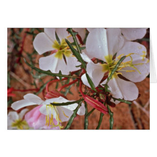 Cartes Le cactus fleurit au printemps les fleurs roses