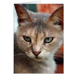 Cartes Le chat a perdu dans la tornade trouvée
