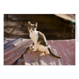 Cartes Le Chili, Valparaiso. Chat sur un toit