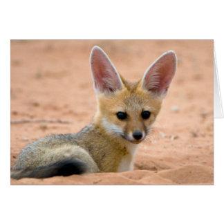 Cartes Le chiot de Fox de cap (Vulpes Chama) scrute avec