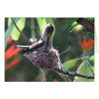 Cartes Le colibri prépare son nid