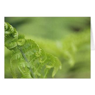 Cartes Le feuille de bordage de fougère, verdure, a