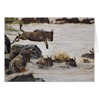 Cartes Le gnou sautant dans la rivière de Mara pendant