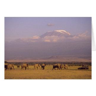 Cartes Le Kenya : Parc national d'Amboseli, éléphants et