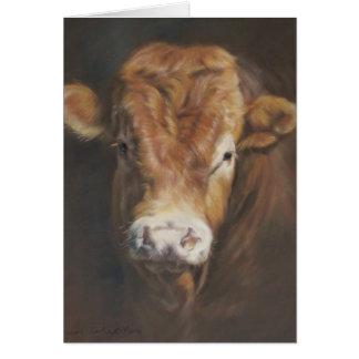 Cartes Le Limousin Taureau
