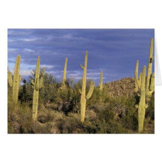 Cartes Le Mexique, Baja del Norte, ressortissant 2 de