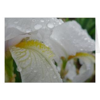 Cartes Le nouveau jour fait du jardinage iris 'Florintina