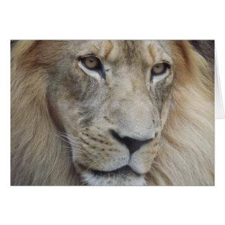 Cartes Le regard fixe d'un lion