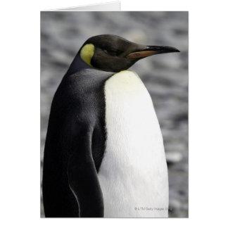 Cartes Le Roi pingouin, plaine de Salisbury, la Géorgie