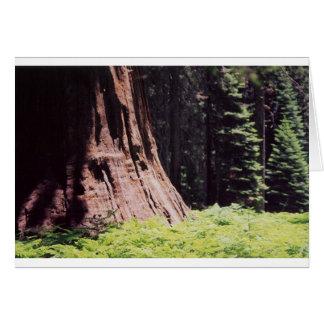 Cartes Le séquoia puissant