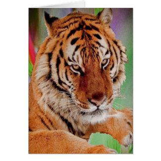 Cartes Le tigre de Bengale