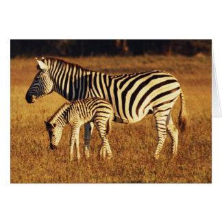 Cartes Le Zimbabwe, parc national de Hwange, Linkwasha