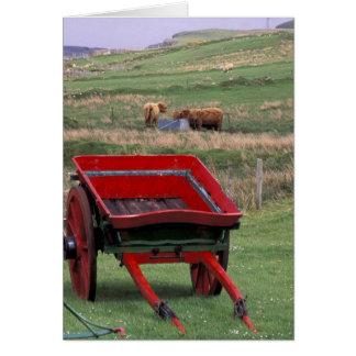 Cartes L'Ecosse, île de Skye, Kilmuir. Animaux de ferme